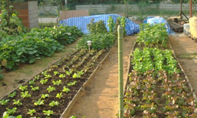 G-Farm 한국농장 지팜